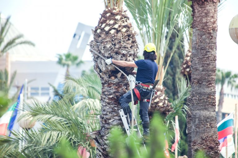 Palm Trimming Services